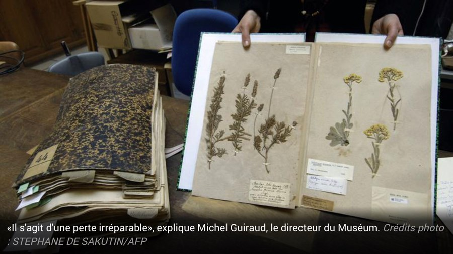 "Destruction By Australian Customs of a 200 year old French/Australian ""herbier"" from Le Have Museum"